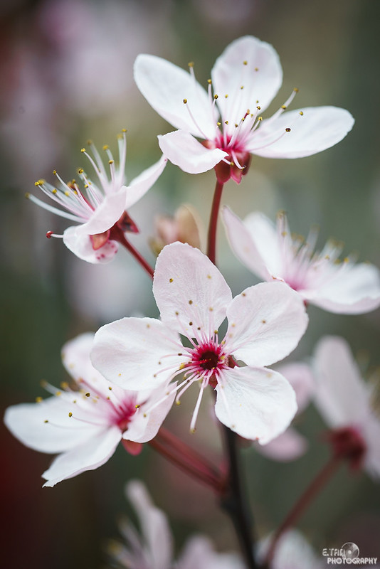Blossom Bliss - 016