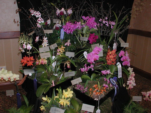 Orchid Show Regional 4 21 05