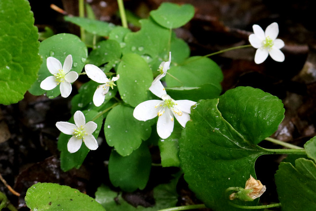six white flowers, two with five petals, one with six, one unknown, and two missing several petals