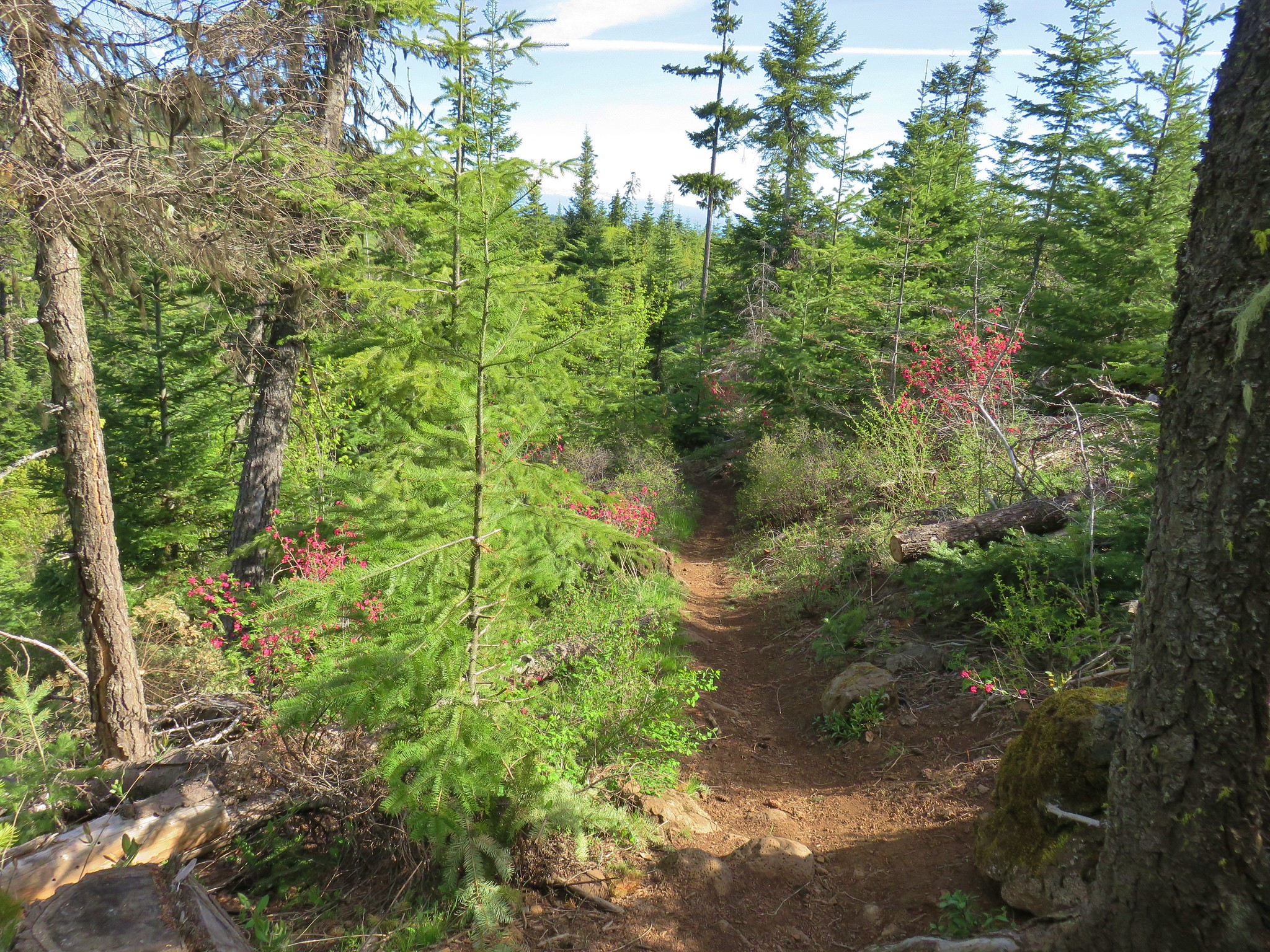 Surveyor's Ridge Trail