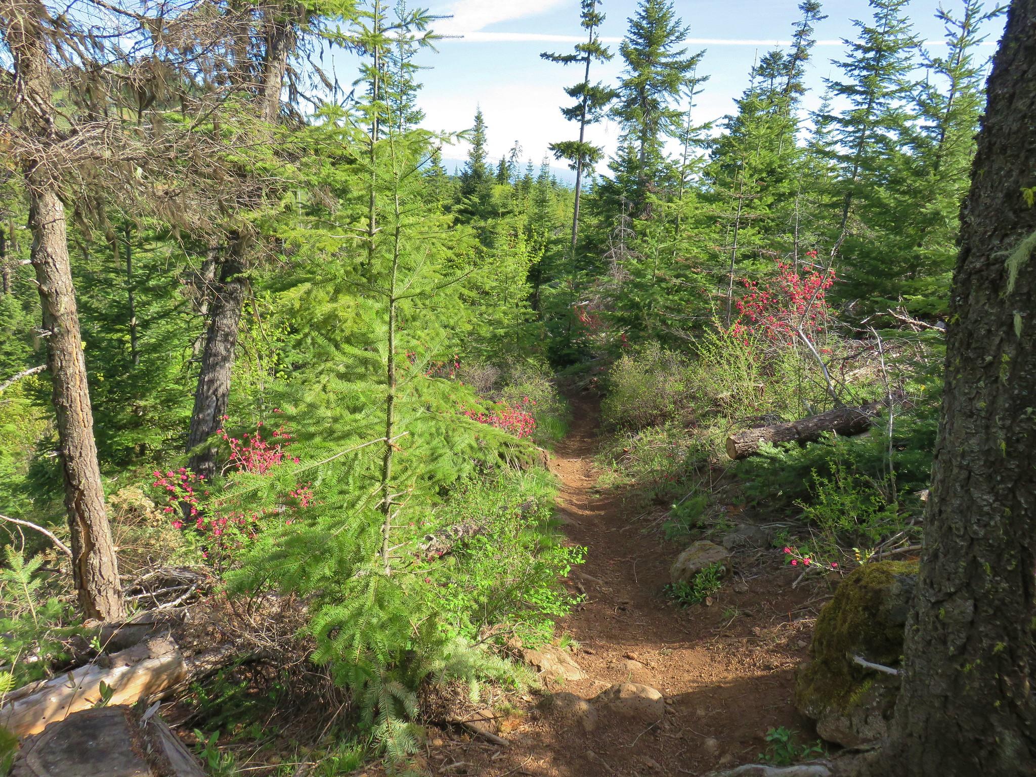 Surveyor's Ridge Trail