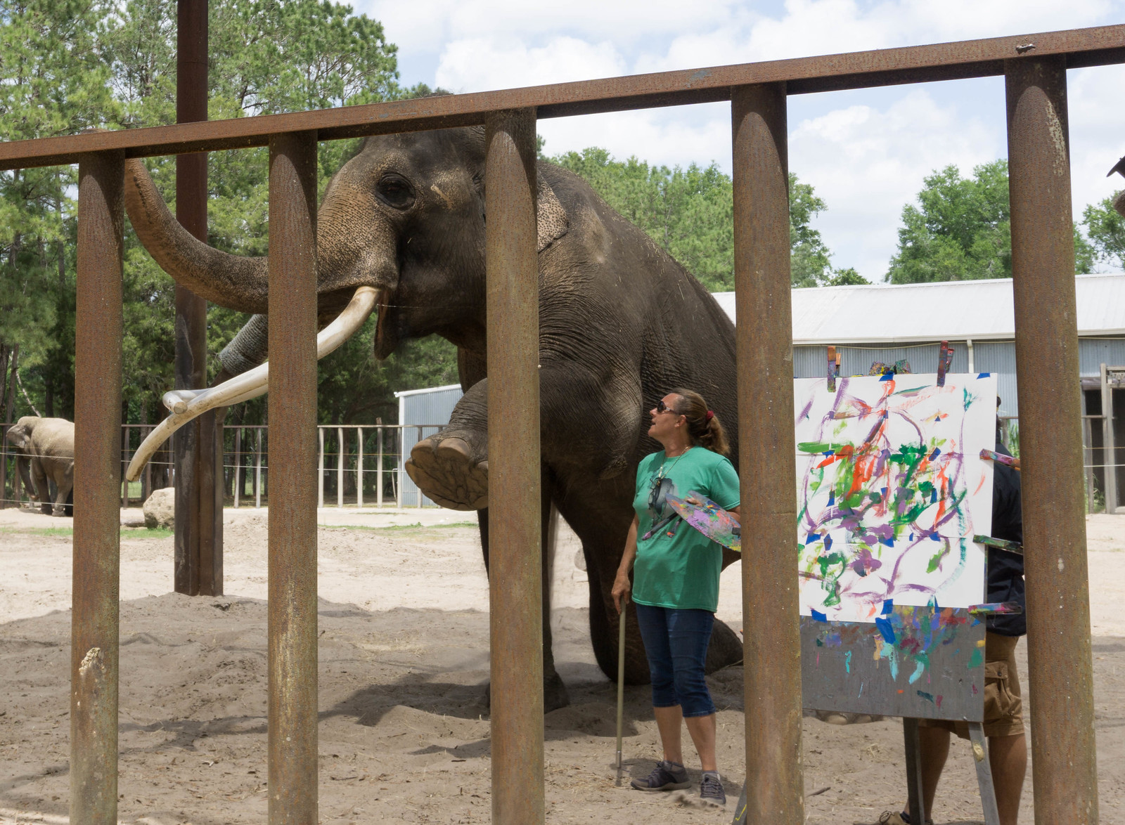 Luke the Asian Elephant Paints - All About Elephants at Two Tails Ranch, Williston, Fla., April 30, 2017