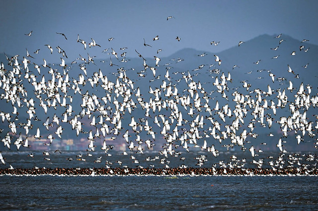 seocheon-shorebirds-web
