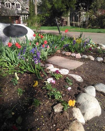 Entering Wychwood Park #toronto #wychwoodpark #latergram #flowers #tulips