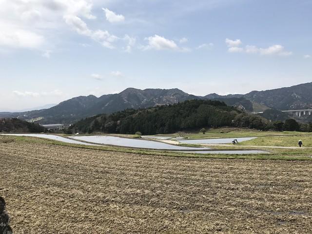 野登山 ミツマタの森ルート 坂本棚田