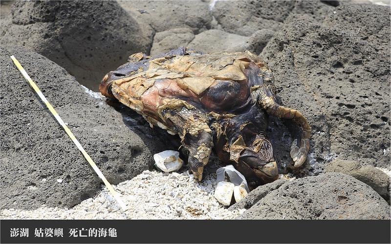 姑婆嶼_死亡的海龜