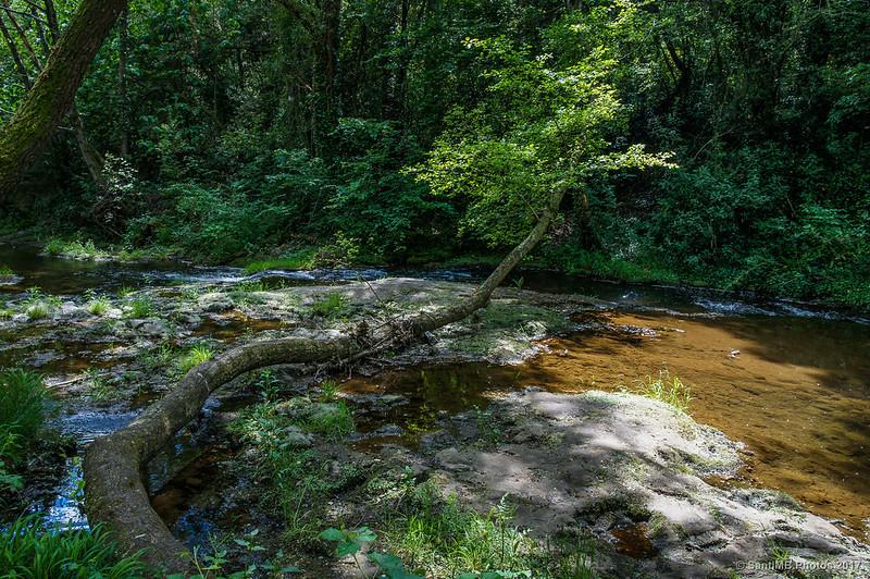 Árbol acostado en el río Brugent