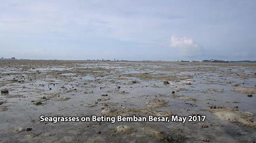 Seagrasses on Beting Bemban Besar, May 2017