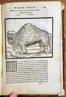 Bison illustration inside La Historia Generale delle Indie Occidentali (1556)