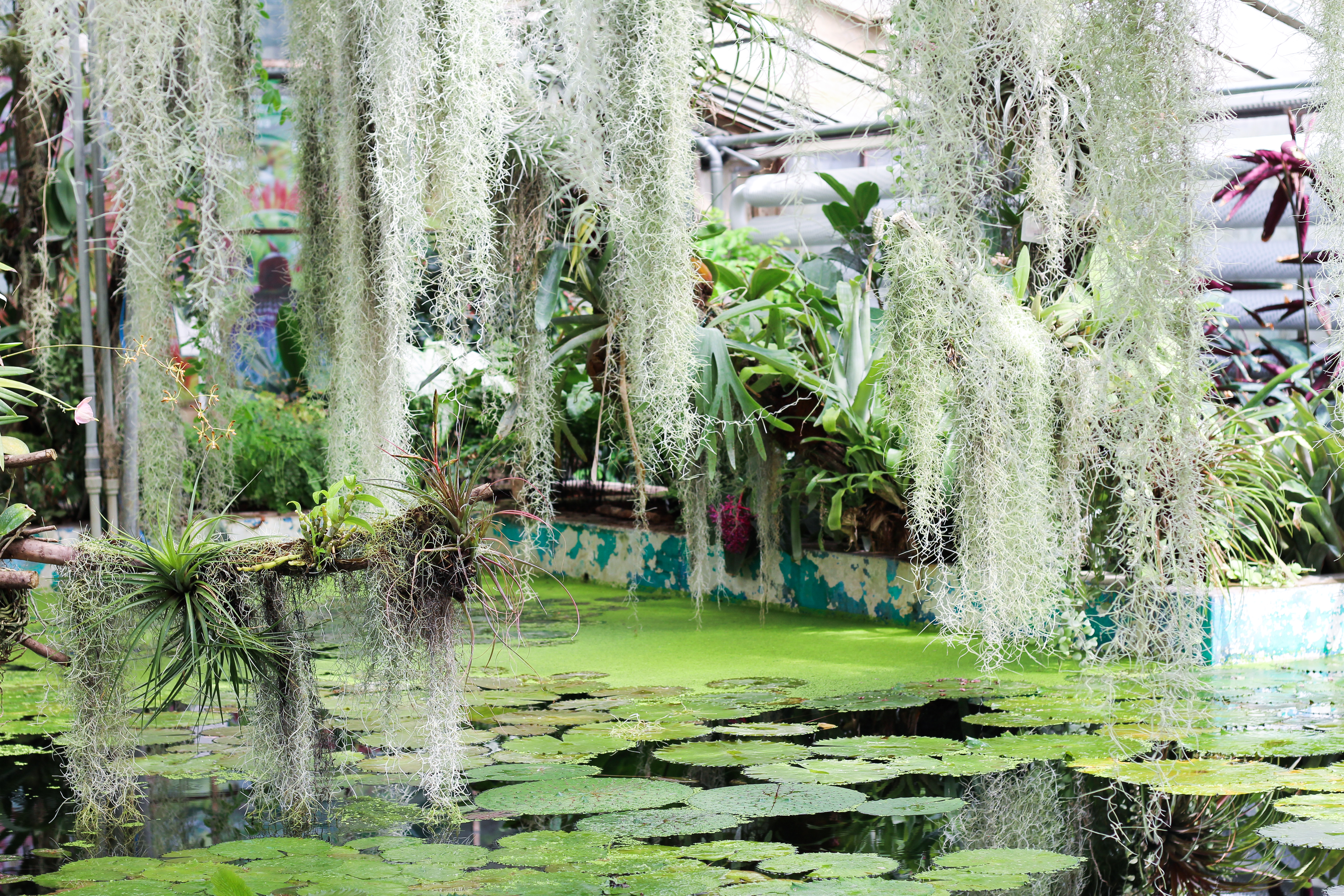 water jungle garden