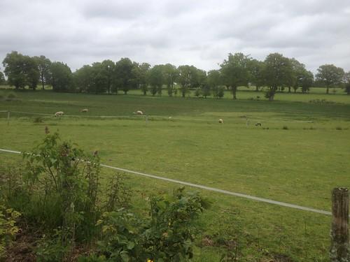 Field view from Zoe's garden