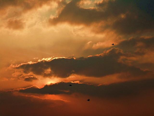 Enchanting Sky