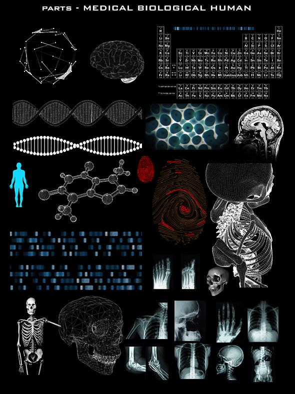 8MEDICAL BIOLOGICAL HUMAN