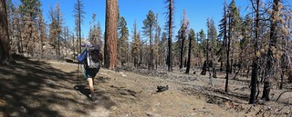 0423 Lake Fire burn zone along the PCT - some trees died but many lived | by _JFR_