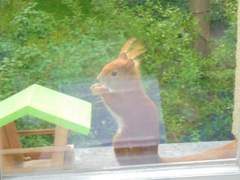 Eichhörnchen26