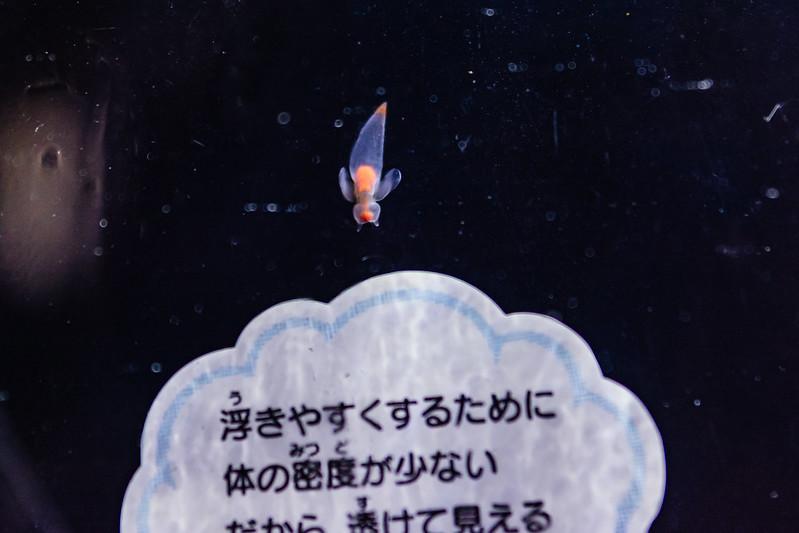 DSC_7874