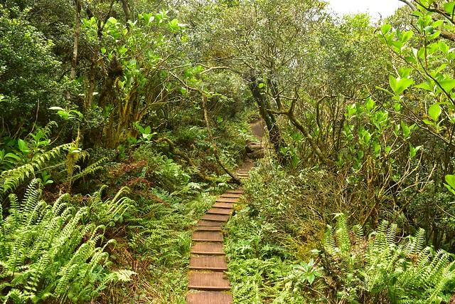 八丈富士 火口の木道