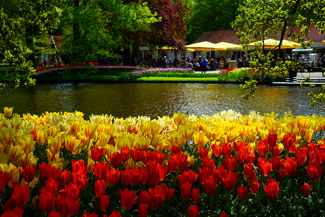 at the KEUKENHOF