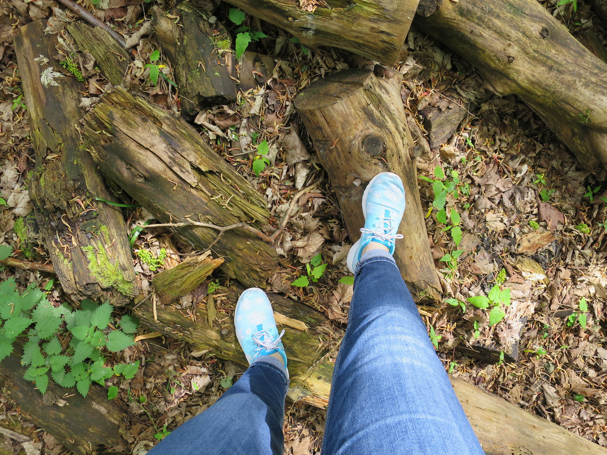 Coombe Country Park, Hello Im Clo, Culture Blogger 21