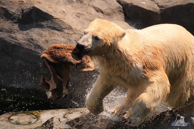 Tierpark Schönbrunn 29.04.2017 158