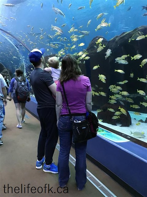 Atlanta_Aquarium6