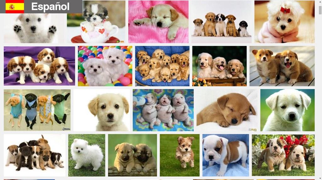 buscando cachorros en español