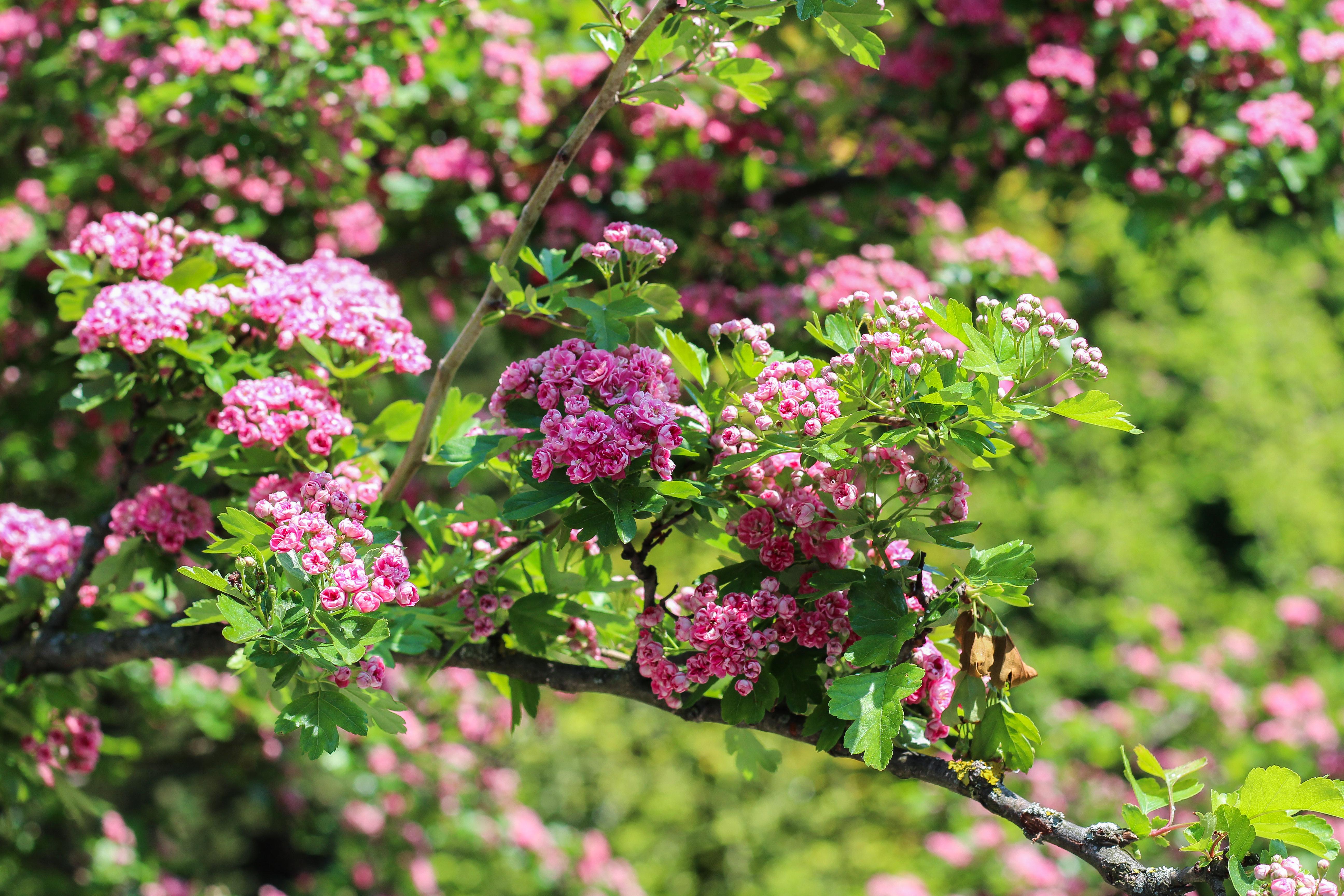 kvety flower