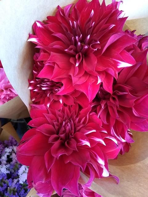 moto-g5-flowers (2)
