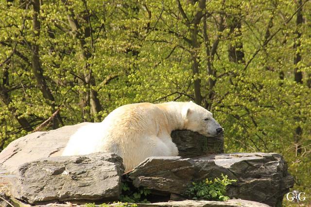 Besuch Tierpark Friedrichsfelde 17.04.173