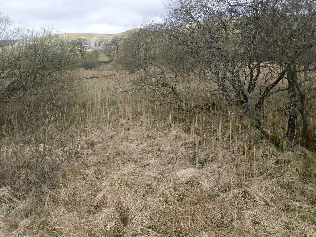 Tarn Moss 40