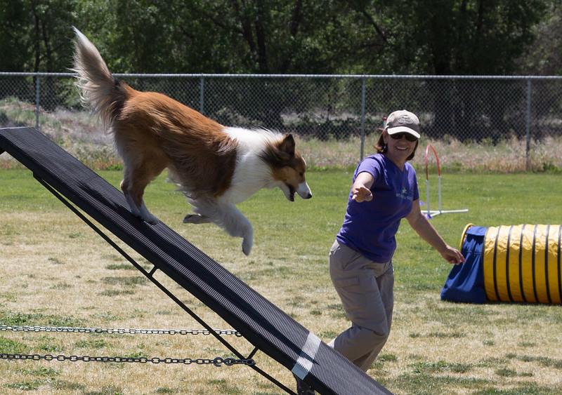 dog_agility_20170506_785