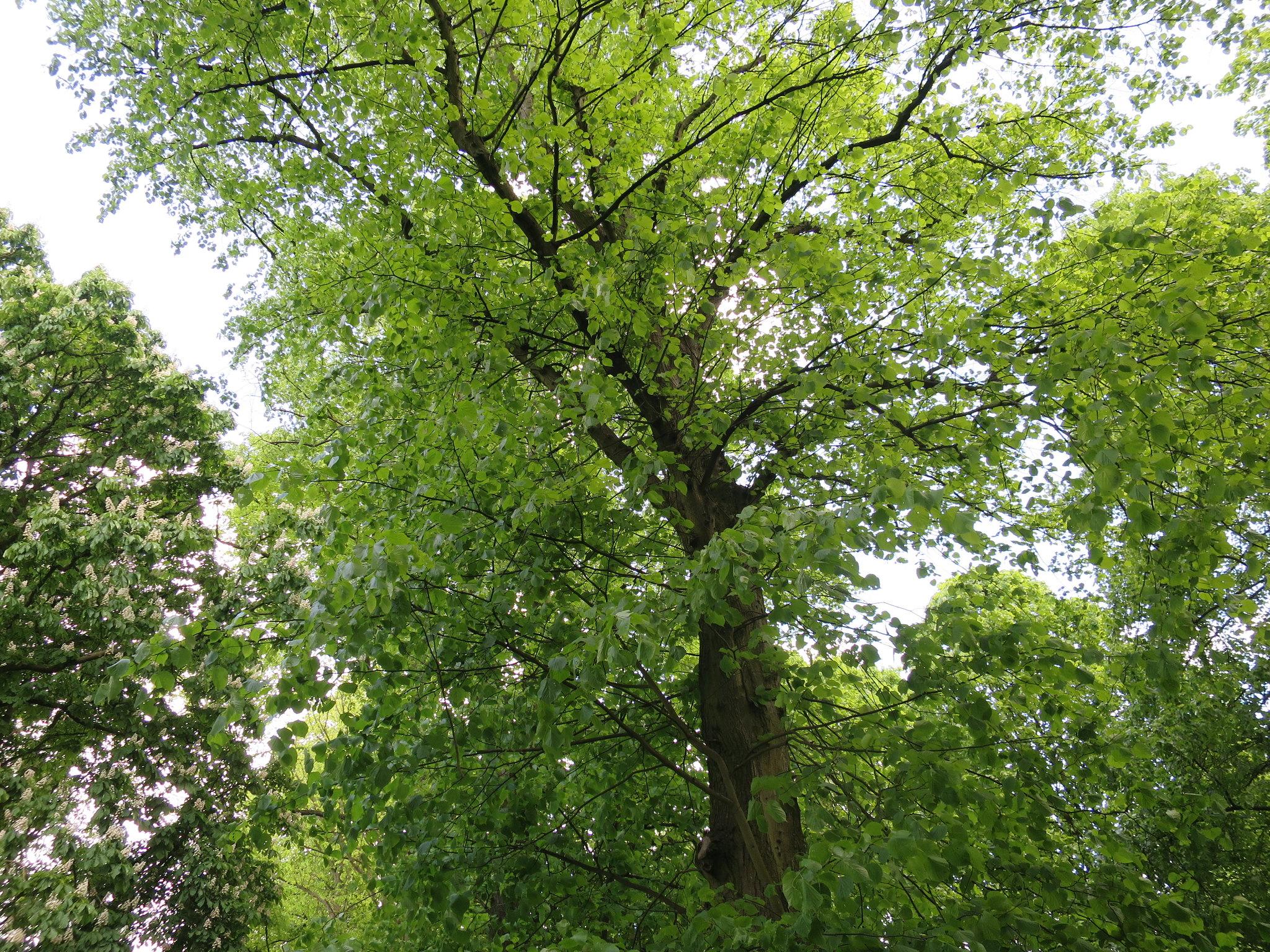 Coombe Country Park, Hello Im Clo, Culture Blogger 2