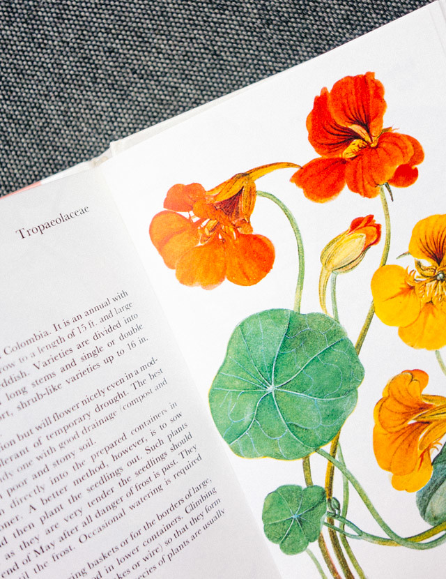 nasturtium illustration in book