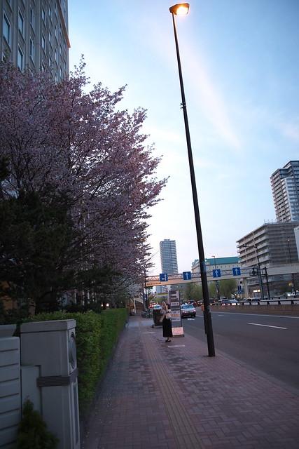 20170503札幌市中央区付近の桜_18