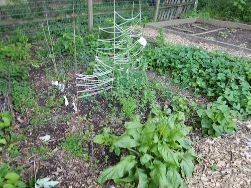 Mid-May Gardening
