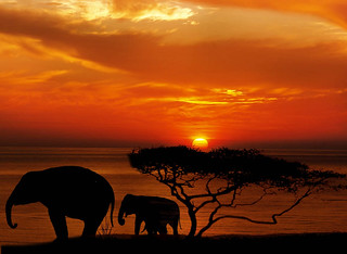 holiday-packages-hotels-travel-agency-african-elephant-sunset | by holidaypackagesworldwide