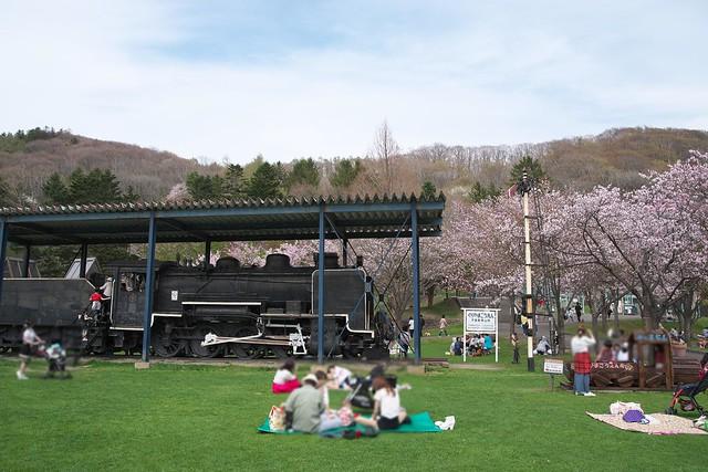 20170505栗山公園の桜_04