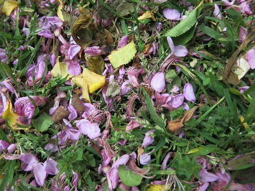 bee and fallen petals