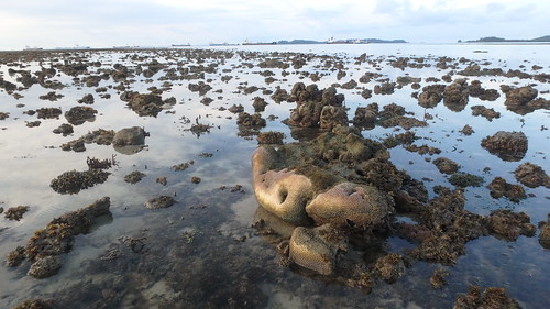 Living reefs of Beting Bemban Besar, May 2017