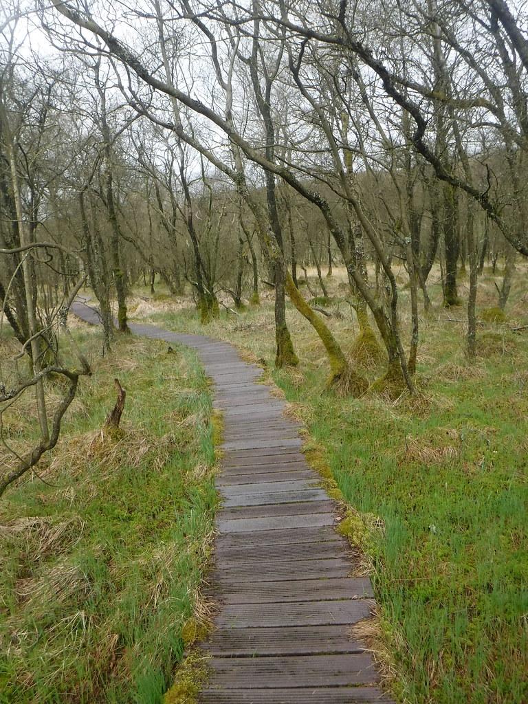 Malham Tarn Moss 14