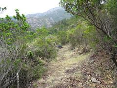 Le chemin après le démaquisage dans le début de la remontée vers Bocca di Ricu