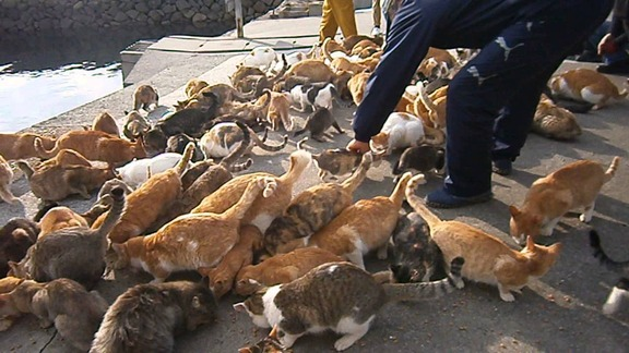 gatos-aoshima