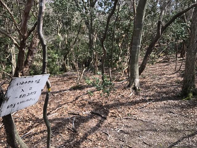 野登山 林道 いわかがみの道入口