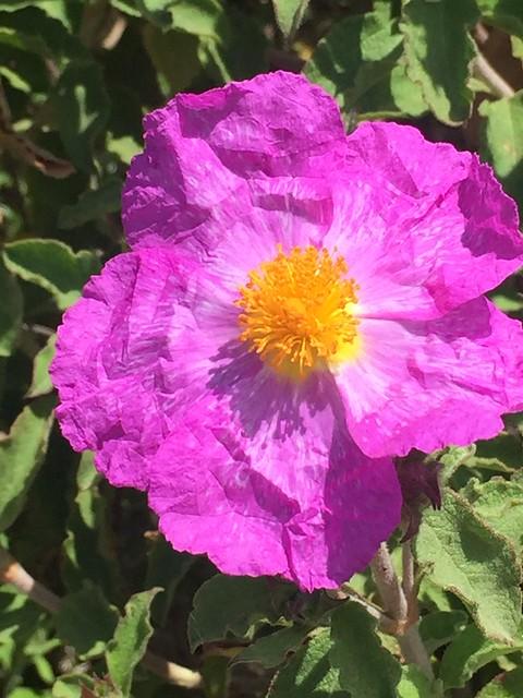 Frühlingshafte Farbenpracht auf Vulcano