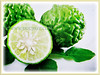 Citrus hystrix (Thai Lime, Kaffir Lime, Makrut Lime, Mauritius Papeda, Limau Purut)