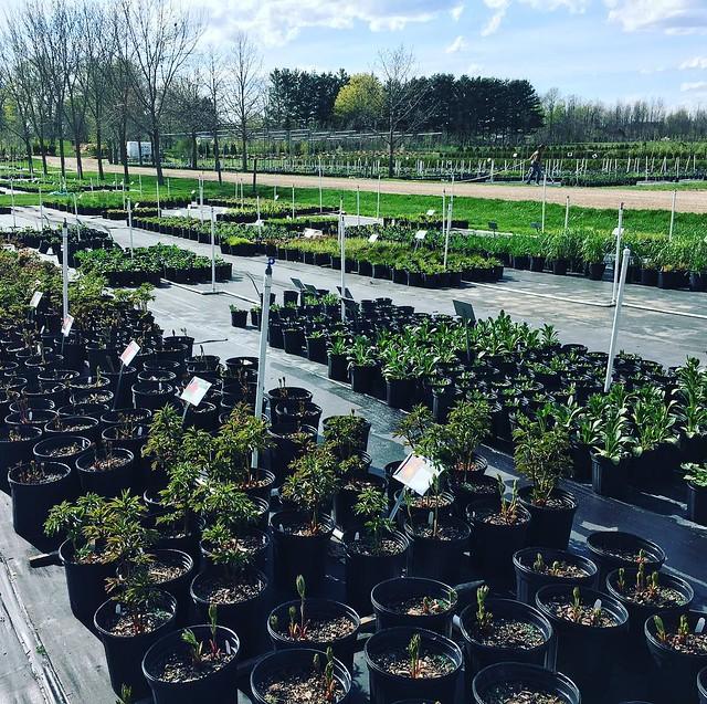 So. Many. Perennials.