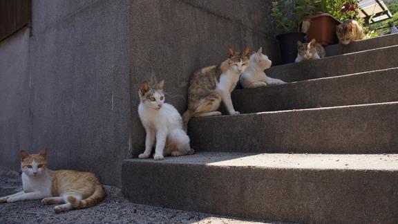 gatos-sanagijima