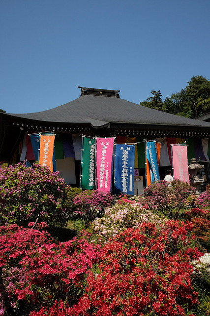 Shiofune Kannon temple Azalea Festival 2017 53