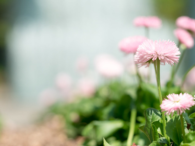 Wadakura Floral