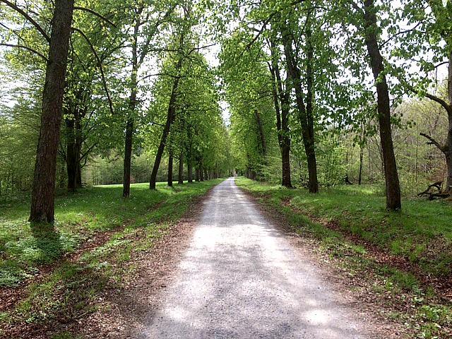 baerenschloessle stuttgart forest